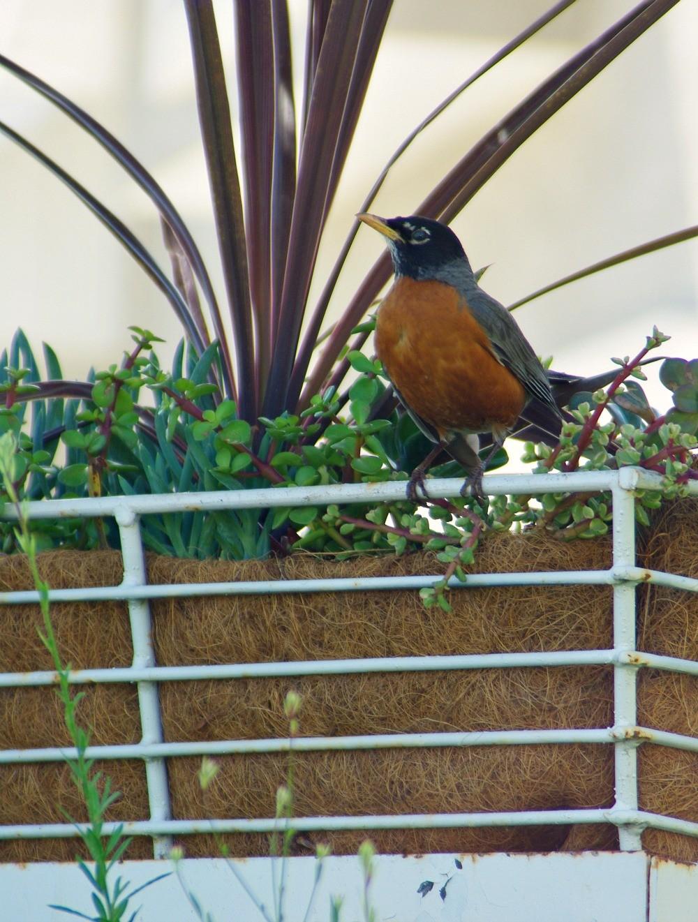 morningbird4